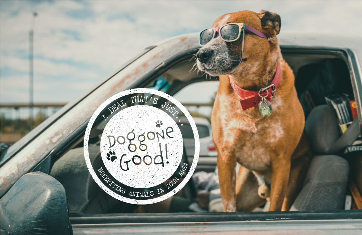 Doggone Good Summer Car and Cards promotion.